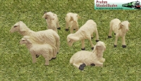 Art.-Nr. 550702 - 7 Sheep (6 pieces) in set